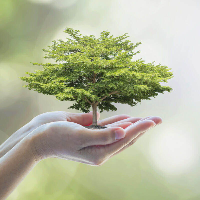 Image: Tiny tree in a persons hands